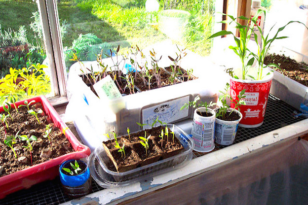 Recycled seed containers